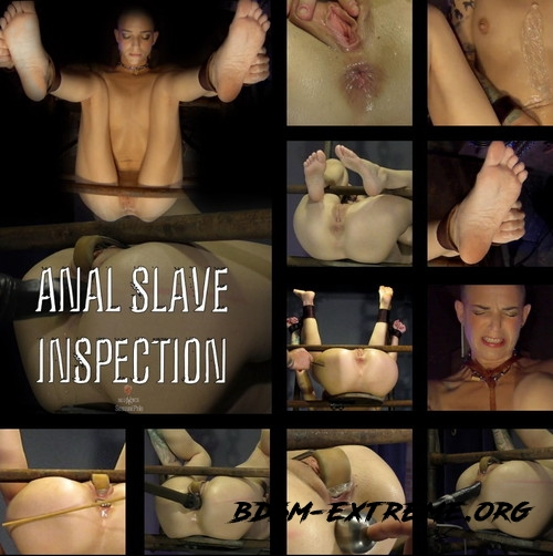 Anal Slave Inspection With Abigail Dupree, Master James (2019/FullHD) [SENSUAL PAIN]