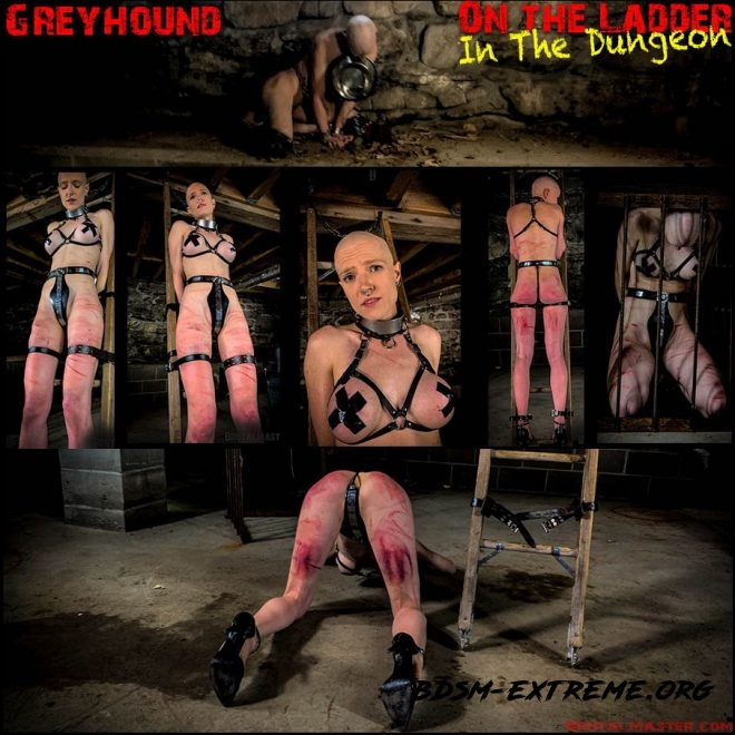 Greyhound – On The Ladder In The Dungeon (2019/FullHD) [Brutal Master]